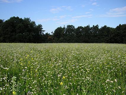 Brabants landschap natuurmengsel