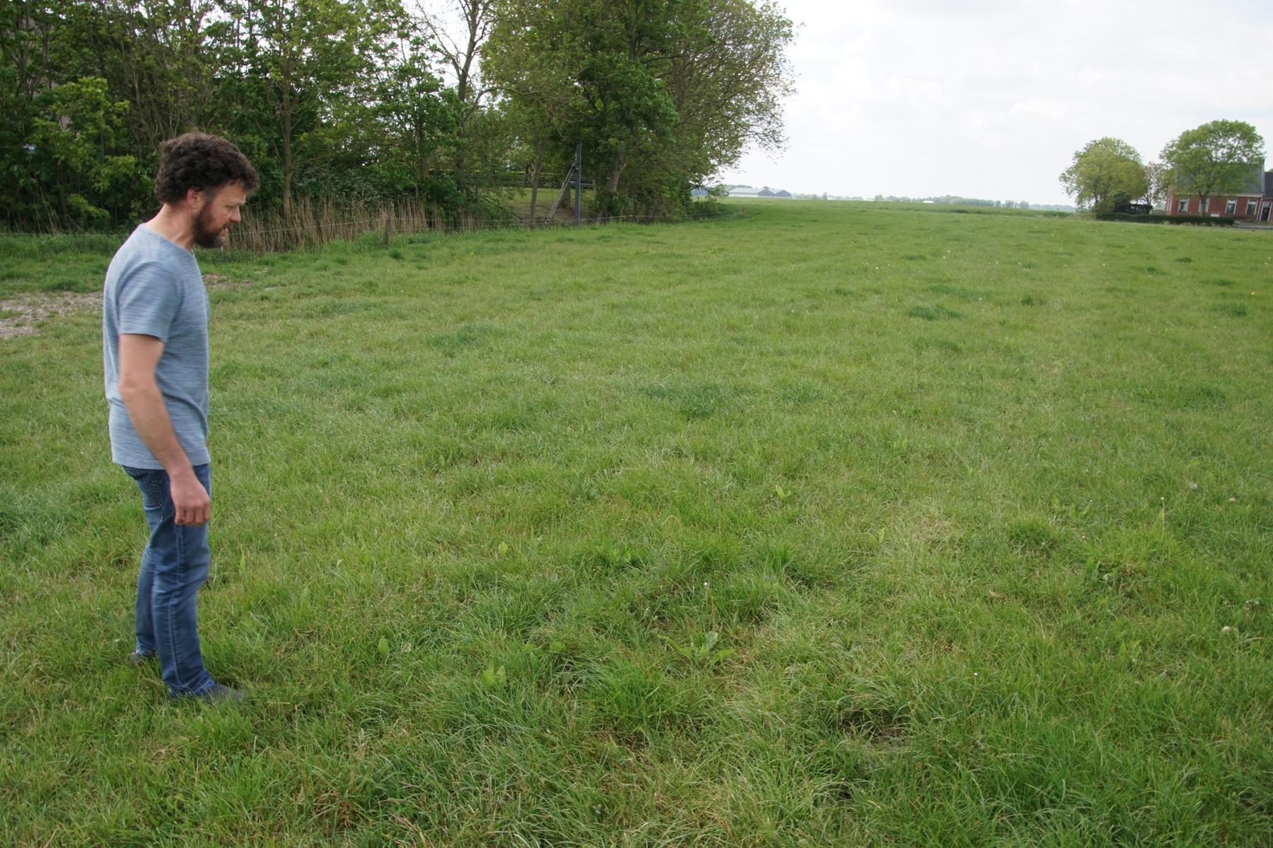 Soortenrijk grasland